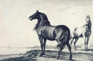 Паулюс Поттер. Два коня