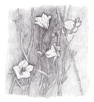 """Марианна Маслова. Из серии """"Мифы о цветах"""": Сентябрь: Колокольчики"""