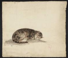 Sketch sleeping cat