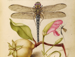 Still life with insects