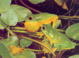 Эго Гуиотто. Оранжевая лягушка