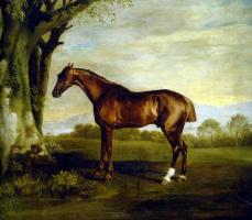Джордж Стаббс. Скаковая лошадь