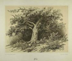 Иван Иванович Шишкин. Дуб. 1867 Автолитография. Камень