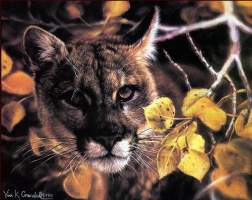 Виви Крандалл. Золотые глаза