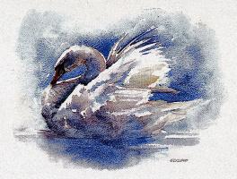 Рей Эклунд. Лебедь
