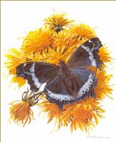 Карл Брендерс. Бабочка и желтые цветы