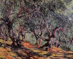Оливы в Бордигере