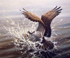 Жан-Люк Грондин. Бой в воде