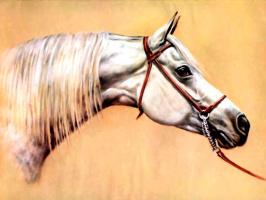 Дональд Шварц. Лошадь 8