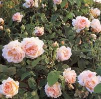 Клей Перри. Цветы