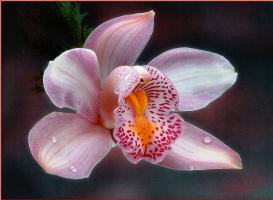 Саймон Кейн. Красивый цветок