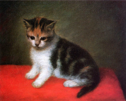 Джордж Стаббс. Котенок с белым окрасом