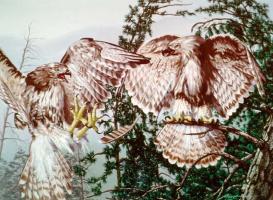 Дональд Руст. Птицы и лицо