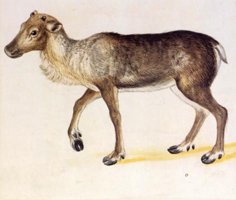 Giuseppe Arcimboldo. Deer shed antlers