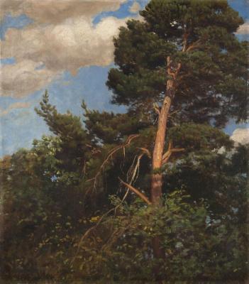 Pál Szinyei Merse. Tall pine