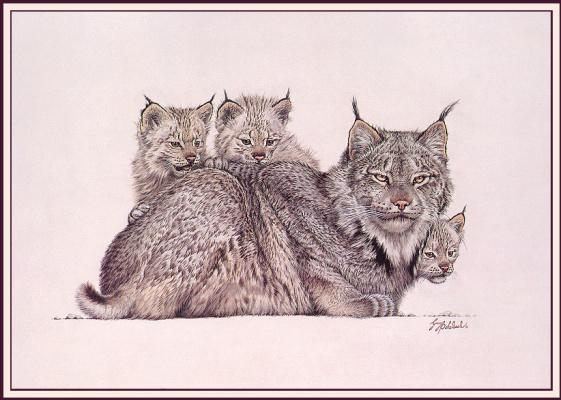 Рысиное семейство