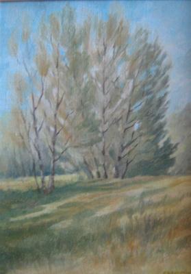 Весна в шумилинском лесу