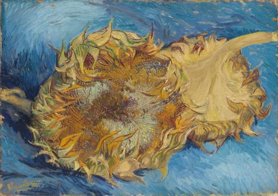 Vincent van Gogh. Sunflowers on blue