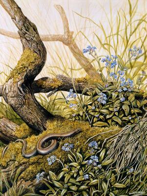 Дик Твинней. Природа 057