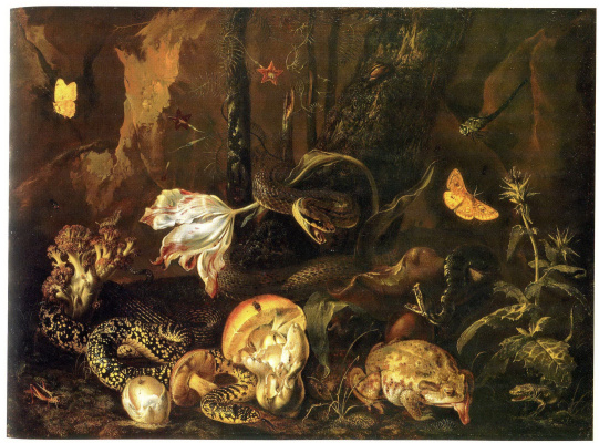 Otto Marceus van Scriec. Still life with insects and amphibians