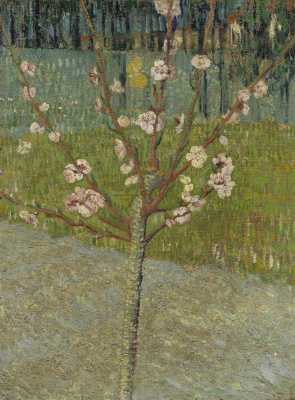 Vincent van Gogh. Blossoming almond tree