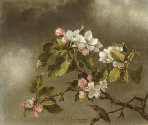 Мартин Джонсон Хед. Колибри и цветущая яблоня