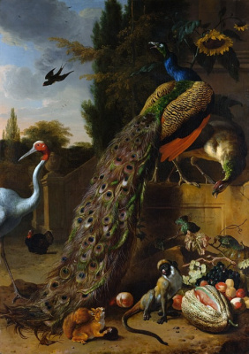 Melchior de Hondecuiter. Peacocks