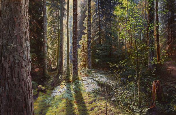 Sushienok64@mail.ru Михайлович Сушенок Игорь. Coniferous forest