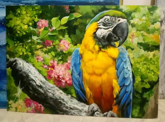 Olga Shatskaya. Macaw
