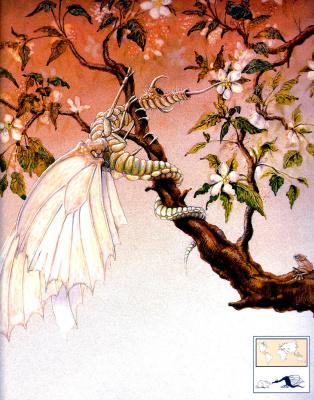Грэм Бейс. Японская бабочка-ящерица