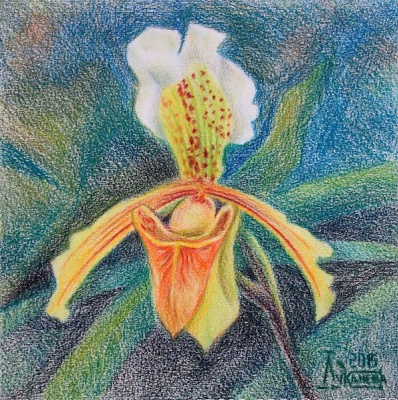 The Lady's Slipper 2