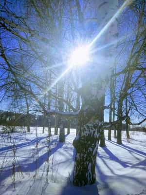 Evgenia Yanushkina. Winter