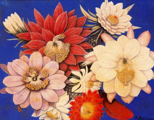 Хигинио Маллебрера. Большие цветы