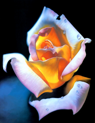 Патриция Атти. Роза