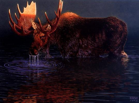 Дональд Керли. Холодная вода