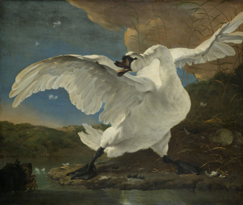 Ян Асселин. Угрожающий лебедь
