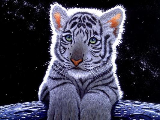 Шим Шиммель. Белый тигр