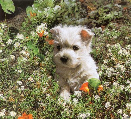 Росс Суилен. Маленький пес
