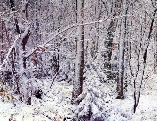 Дэвид Мюнх. Снег