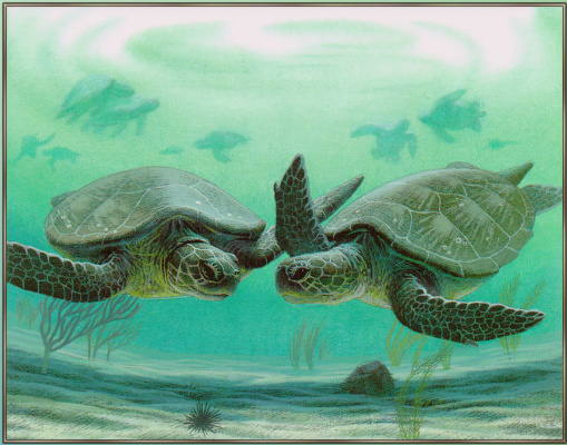Аликс Берензи. Две черепахи