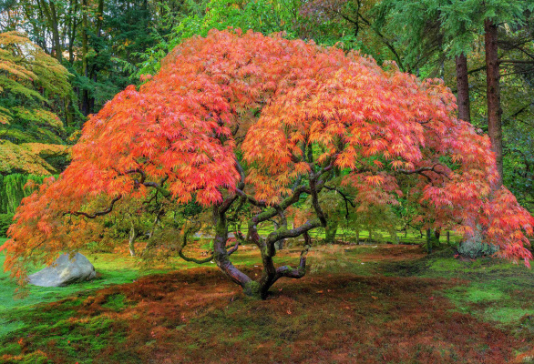 Aaron Reed. The Burning Bush 1 of 200