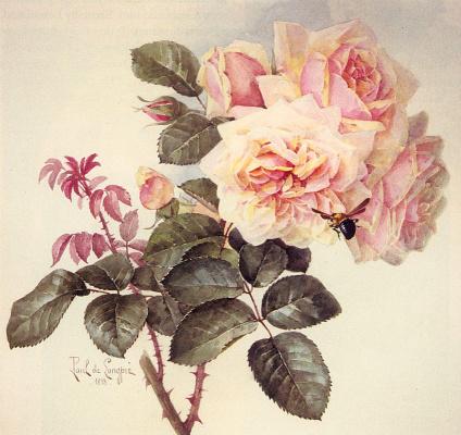 Лонгпр. Роза