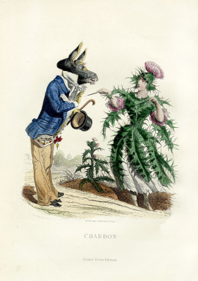 "Jean Inias Isidore (Gerard) Granville. Thistle. The series ""Animate Flowers"""