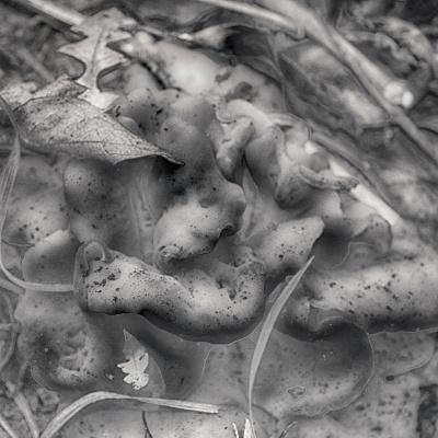 Peg Lariviere. Fungi