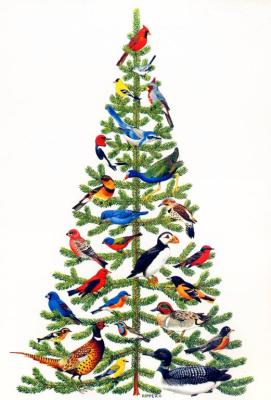 Чак Риппер. Птицы Северной Америки