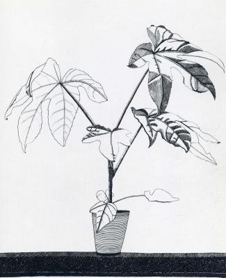 Люсьен Фрейд. Растение