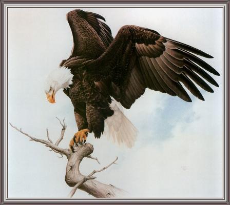 Глен Лоатес. Белоголовый орлан