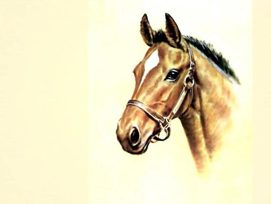 Дональд Шварц. Лошадь 6