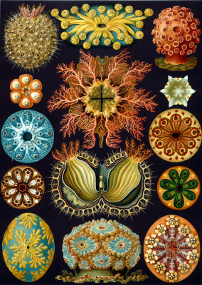 "Ernst Heinrich Haeckel. Acid Disease ""The beauty of form in nature"""