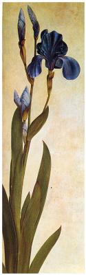 Albrecht Durer. Iris